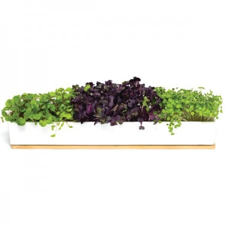 UrbanGreens Microgreens Windowsill Grow Kit