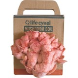 Grow Your Own Mushroom Box - Pink Oyster