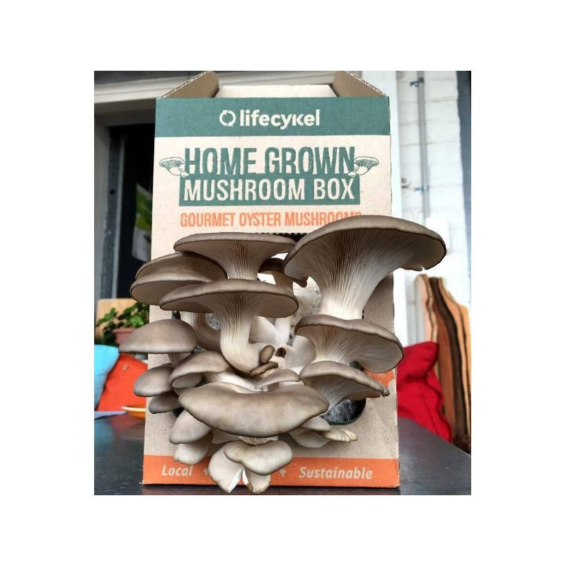 Grow Your Own Mushroom Box by Life Cykel - Biome Eco Stores