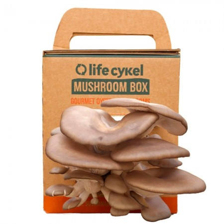 Grow Your Own Mushroom Box by Life Cykel