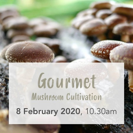 'Gourmet Mushroom Cultivation' with Little Acre Mushroom Sat 8 Feb Brisbane Workshop