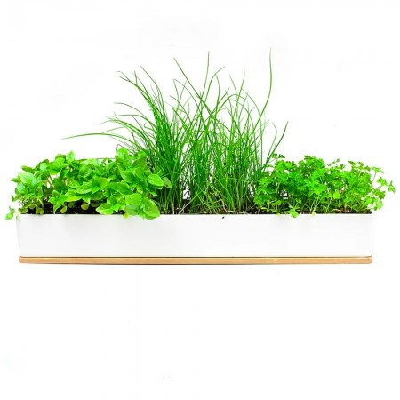 UrbanGreens Microherbs Windowsill Grow Kit