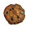 Banksia Coaster (Single)