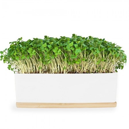'UrbanGreens Mini Microgreens Grow Kit - Mustard