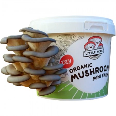 Buy Little Acre Mushrooms Organic Mushroom Mini Farm