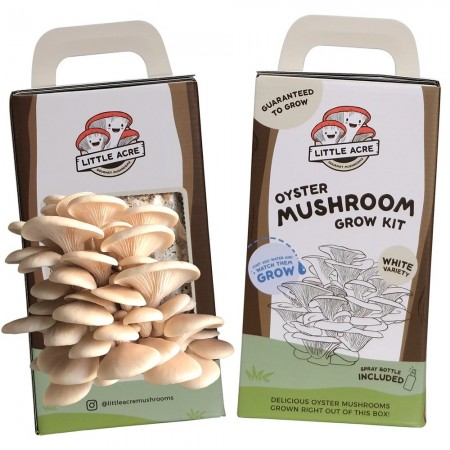 Little Acre Gourmet Mushrooms Grow Kit - White Oyster