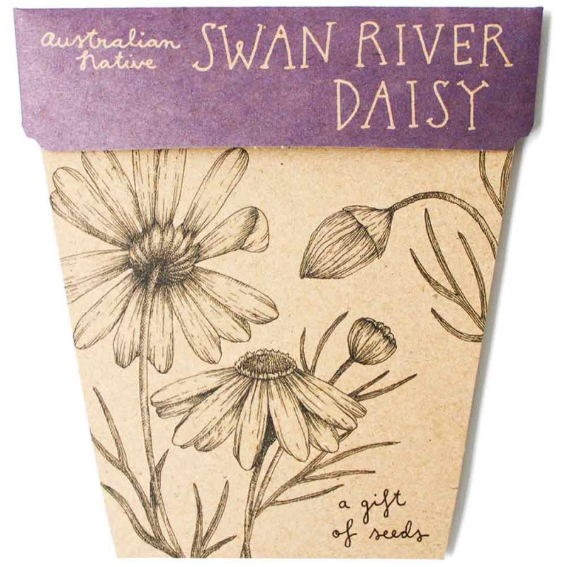 Sow 'n Sow Seed Card Native Swan River Daisy