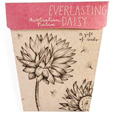 Sow 'n Sow Gift of Seeds Greeting Card - Native Everlasting Daisy