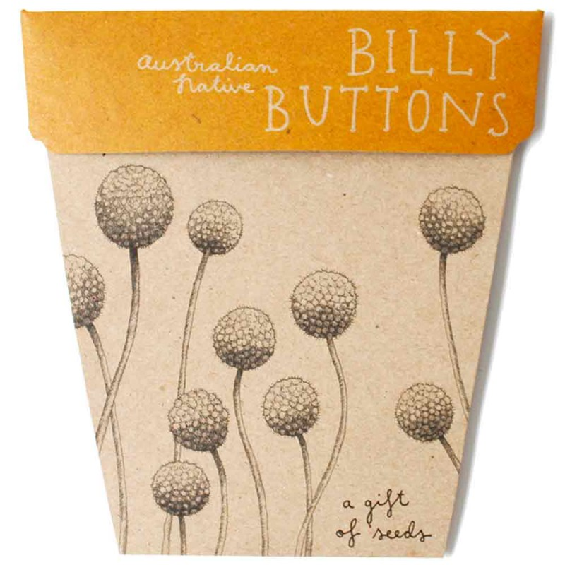 Sow 'n Sow Seed Card Native Billy Buttons