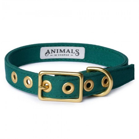 Animals In Charge All Weather Dog Collar - Forest Green Brass