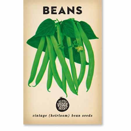 Heirloom seeds - beans windsor long pod