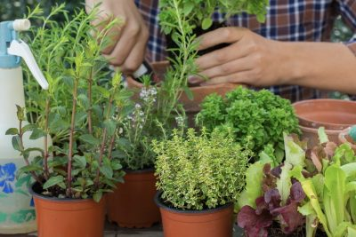 What to plant in late Autumn and Winter in Australia