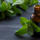 Natural Pest Control: How to Repel Pests Using Peppermint Oil