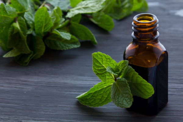 natural pest control how to repel pests using peppermint oil