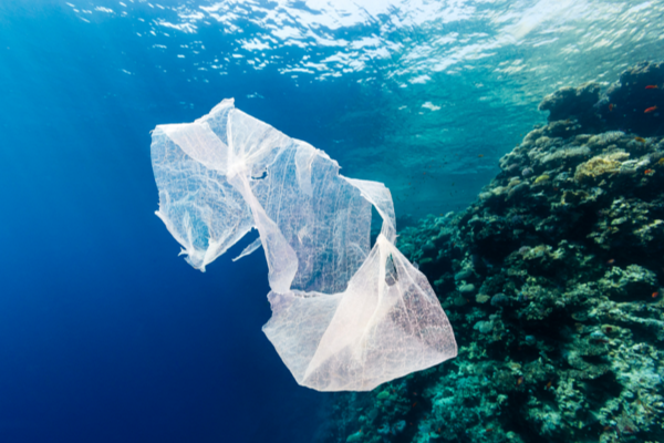 Biodegradable Bags: Are They Really Eco Friendly?   Biome Eco Stores