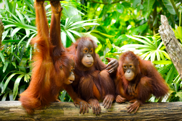 Is palm oil cruelty free - Biome Eco Stores