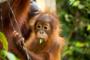 How to avoid hidden palm oil this festive season | Palm oil free alternatives | Biome Eco Stores