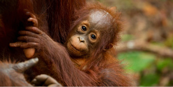 Our stance on palm oil