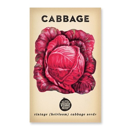 Heirloom seeds - cabbage 'savoy purple'