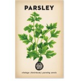 Heirloom seeds - parsley italian