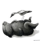 Buy Renee Treml small print - tired wombat with one curlew